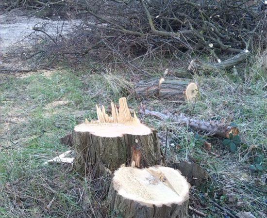 Mein Freund, der Baum ist tot