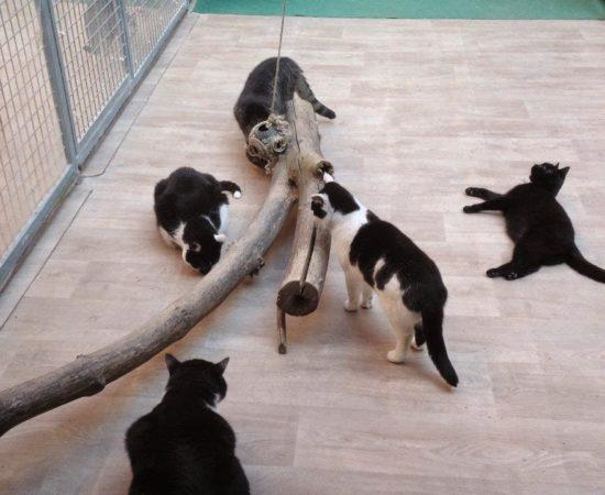 Katzenhaus in Halle ist umgezogen